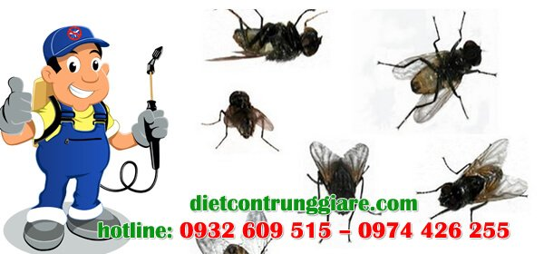 dịch vụ diệt ruồi tại quận gò vấp giá rẻ