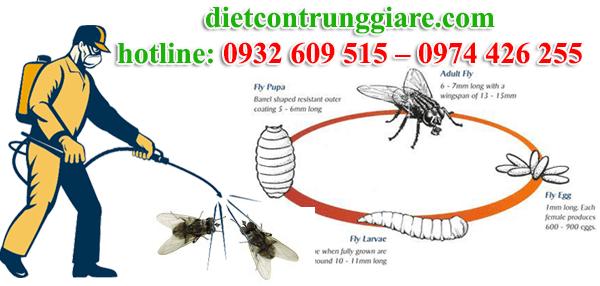 dịch vụ diệt ruồi tại quận phú nhuận giá rẻ
