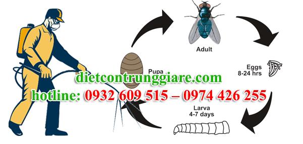 dịch vụ diệt ruồi tại quận tân bình giá rẻ