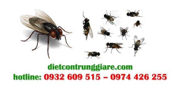 dịch vụ diệt ruồi tại quận thủ đức giá rẻ