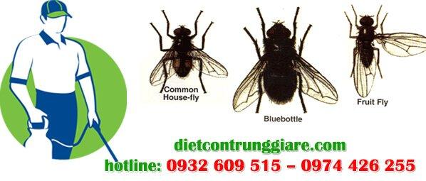 dịch vụ diệt ruồi tại nhà hàng, quán ăn giá rẻ