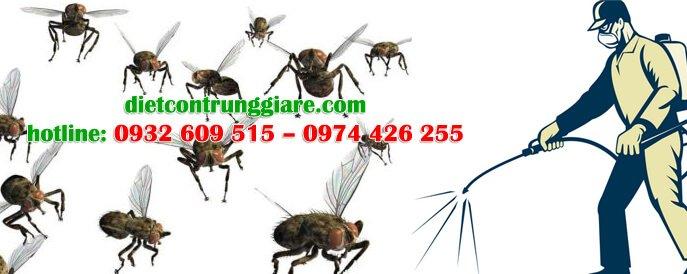 dịch vụ diệt ruồi tại nhà hiệu quả giá rẻ