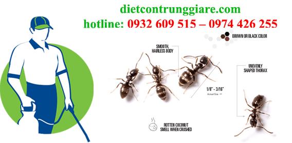 dịch vụ diệt kiến ba khoang tại Bình Chánh