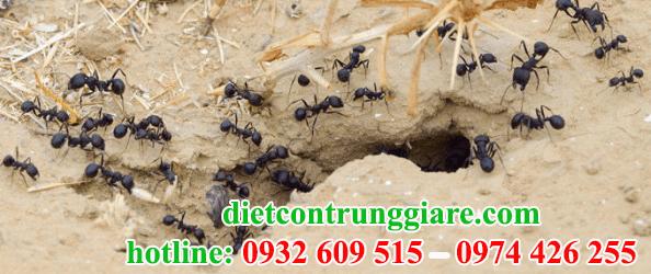 dịch vụ diệt kiến ba khoang tại quận 1