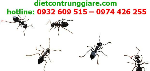 dịch vụ diệt kiến ba khoang tại quận 10