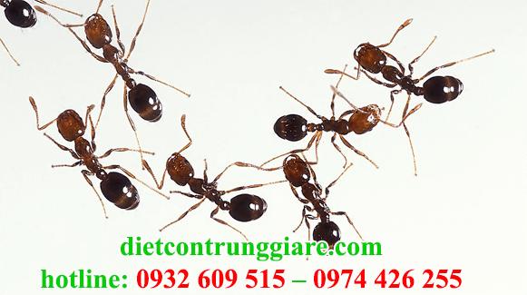 dịch vụ diệt kiến ba khoang tại quận 2