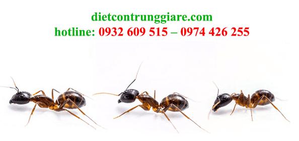 dịch vụ diệt kiến ba khoang tại quận 4