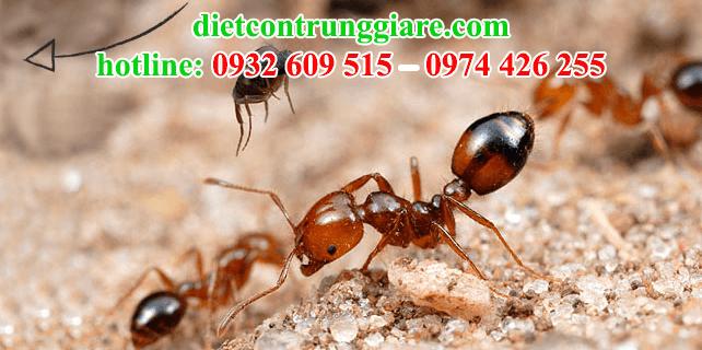dịch vụ diệt kiến ba khoang tại quận 5