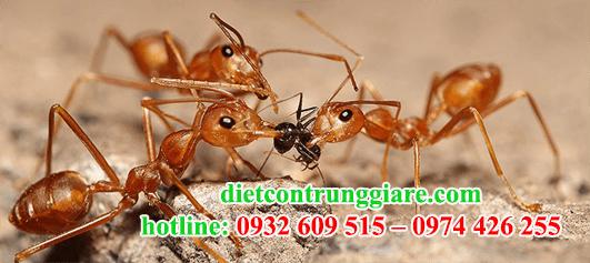 dịch vụ diệt kiến ba khoang tại quận 9