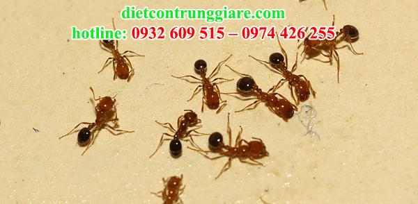 dịch vụ diệt kiến ba khoang tại quận Bình Tân