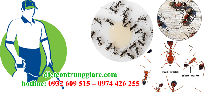 Dịch vụ diệt kiến ba khoang tại quận Bình Thạnh