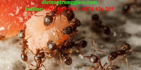 dịch vụ diệt kiến ba khoang tại quận Phú Nhuận