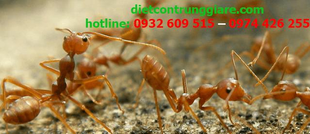 dịch vụ diệt kiến ba khoang tại quận Tân Bình