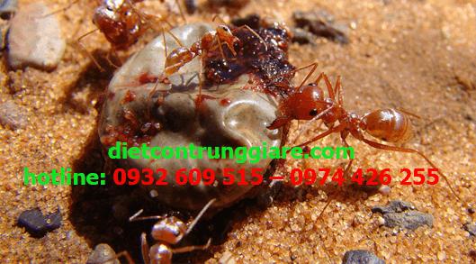 dịch vụ diệt kiến ba khoang tại quận Tân Phú