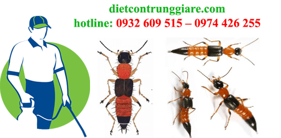 Dịch vụ diệt kiến ba khoang tại Thủ Đức