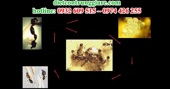 dịch vụ diệt kiến ba khoang chuyên nghiệp