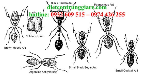 dịch vụ diệt kiến ba khoang siêu rẻ