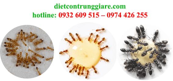 dịch vụ diệt kiến ba khoang tại nhà an toàn