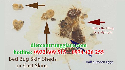 dịch vụ diệt rệp tại quận Bình Thạnh giá rẻ