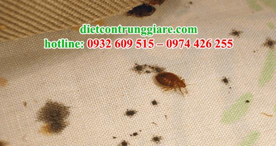 dịch vụ diệt rệp tại quận Tân Bình giá rẻ