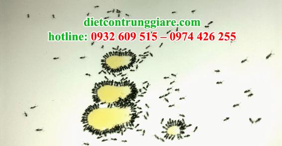 dịch vụ phun thuốc diệt kiến ba khoang