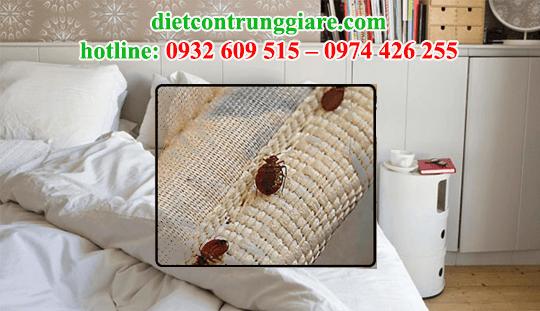 dịch vụ diệt rệp giường tận gốc giá rẻ