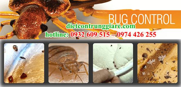 dịch vụ diệt rệp tại cần giờ giá rẻ