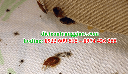 dịch vụ diệt rệp tại củ chi giá rẻ