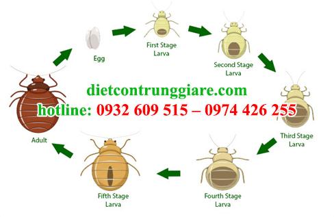 dịch vụ diệt rệp tại quận Tân Phú giá rẻ