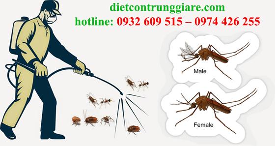 diệt muỗi tại quận 8