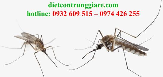 diệt muỗi tại huyện cần giờ