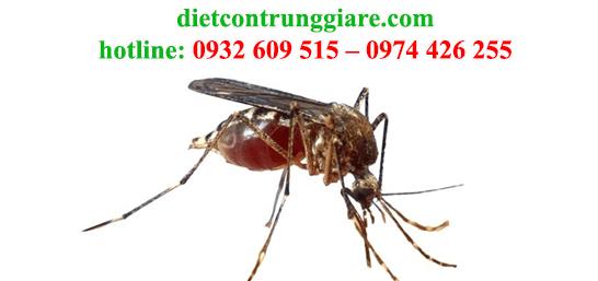 diệt muỗi tại củ chi