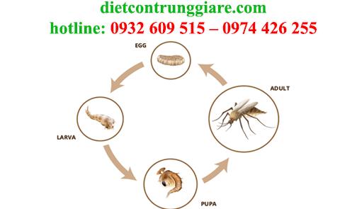 diệt muỗi tại hcm giá rẻ