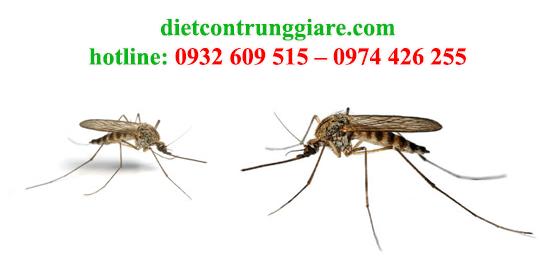 diệt muỗi tại nhà bè