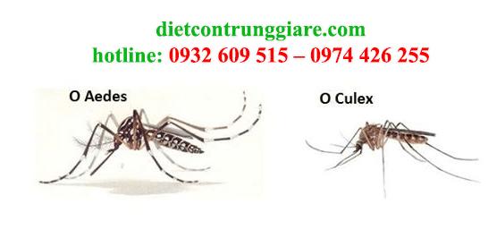 diệt muỗi tại quận bình tân