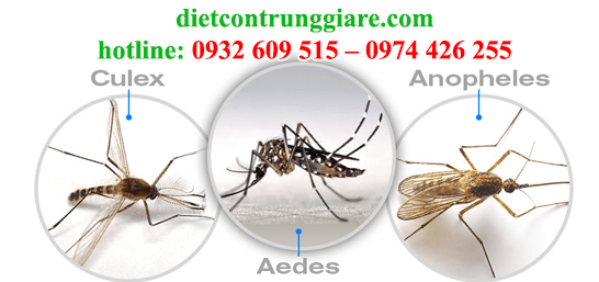 diệt muỗi tại quận tân phú