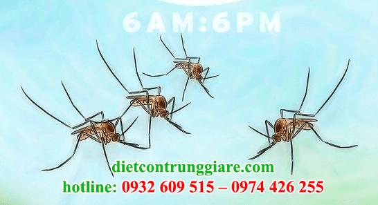 kiểm soát muỗi chuyên nghiệp giá rẻ