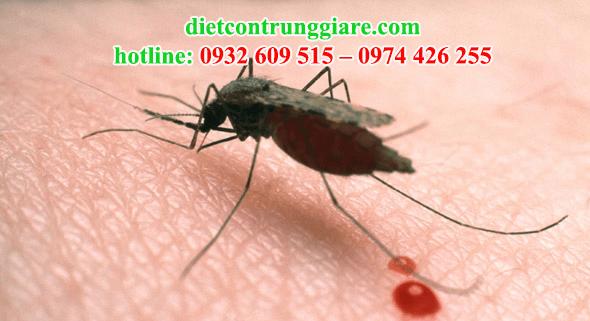 kiểm soát muỗi quận 4 giá rẻ