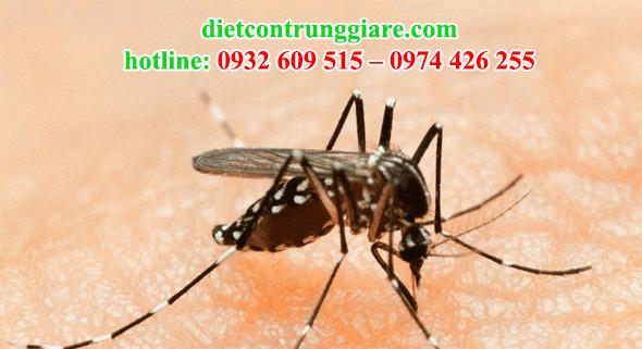 kiểm soát muỗi quận 9 giá rẻ