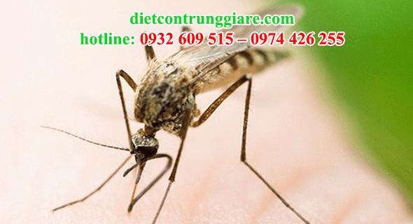 kiểm soát muỗi quận 5 giá rẻ