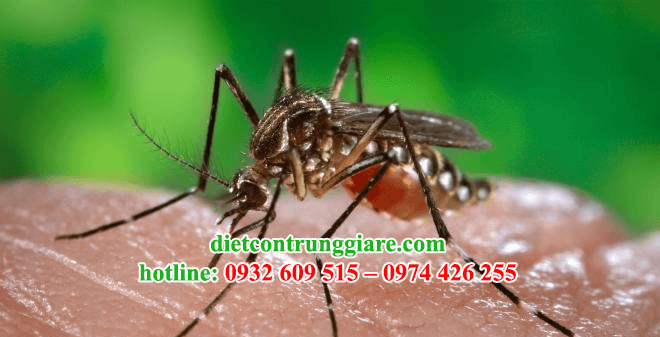 kiểm soát muỗi quận Tân Bình giá rẻ