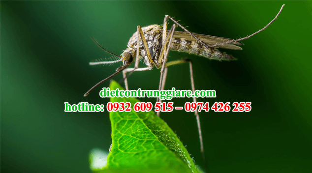 kiểm soát muỗi tận nơi giá rẻ