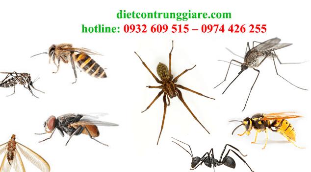 kiểm soát côn trùng gây hại tại cần giờ