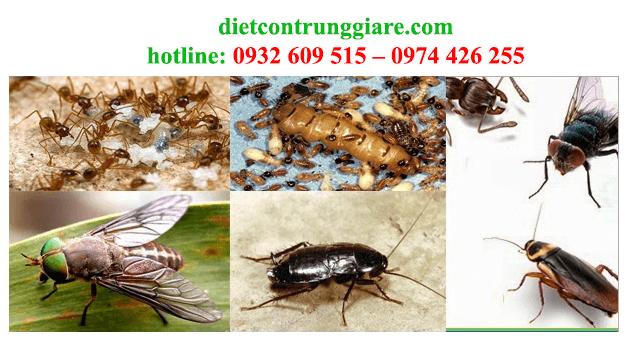 kiểm soát côn trùng gây hại tại hcm