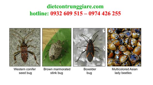 kiểm soát côn trùng gây hại Thủ Đức