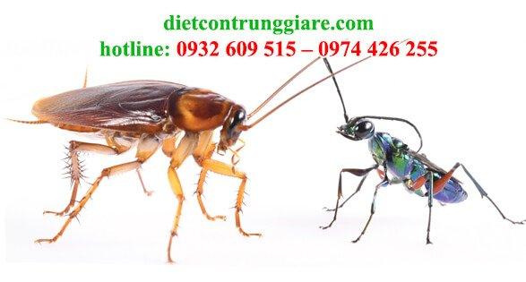 những côn trùng nào ăn gián
