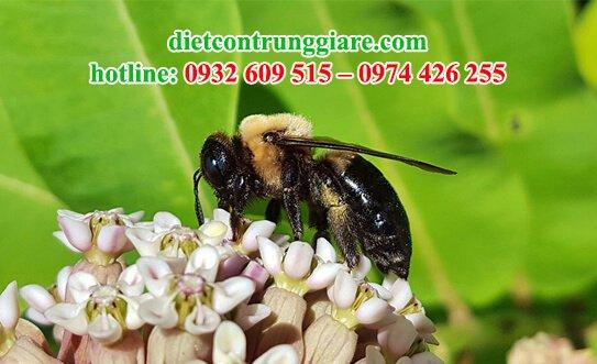 ong thợ mộc có ăn gỗ không