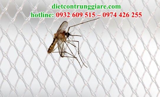 phải làm gì nếu có muỗi trong phòng