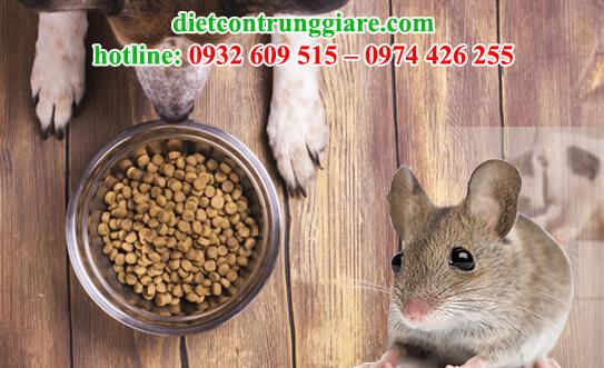 chuột có ăn thức ăn của chó không