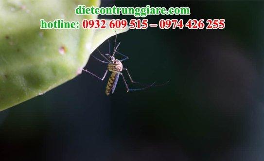 muỗi có bị thu hút bởi màu sắc không